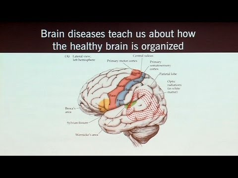 Brain Games that Capture Brain Circuits and What Neuroscience Tells Us about the Self