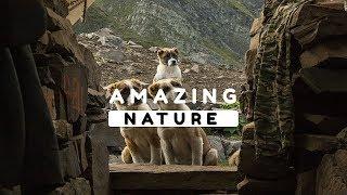 Beautiful Nature Video in Full HD - Summer Season - Peak Ginic - Episode 5 - 8 Minute