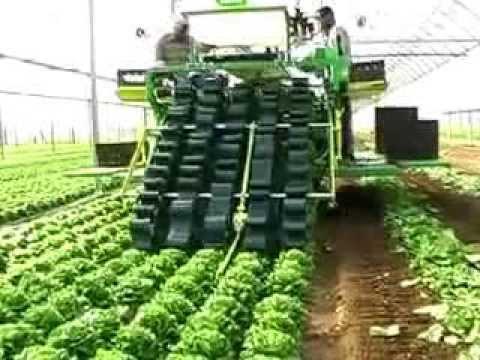 Nông nghiệp Nhật Bản -Thu hoạch rau tại Nhật Bản
