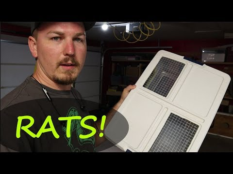 rats-in-a-tub!- -making-a-rat-carrier-tub- -mixology-#19