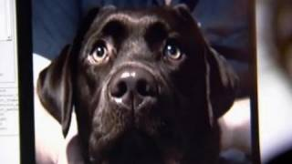Can dogs sense emotion? - Horizon: The Secret Life of the Dog - BBC thumbnail