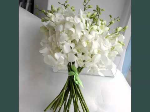 White Dendrobium Orchids Identify Breed By Picture Flower White
