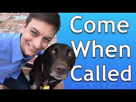 How to Train your Dog to Come When Called