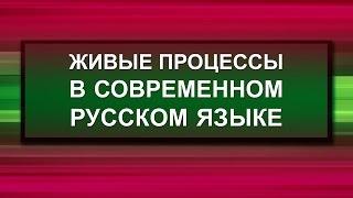 Живые процессы в современном русском языке. Лекция 2. Демократизация русского языка