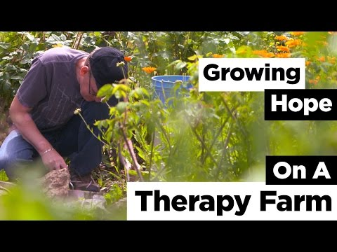 Growing Hope on a Therapy Farm