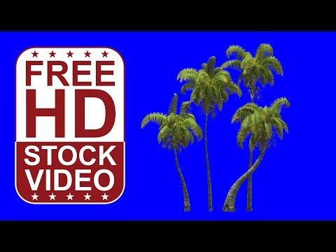 FREE HD video coconut palms with wind effect on blue screen 3D animation