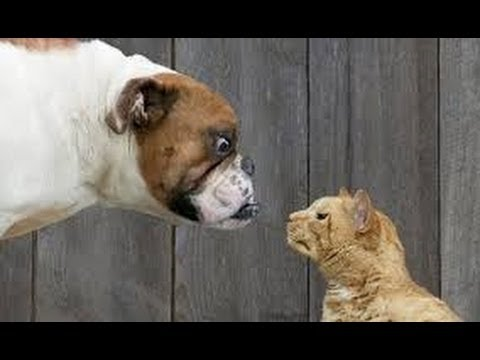 Funny Videos Cats And Dogs Best Compilation