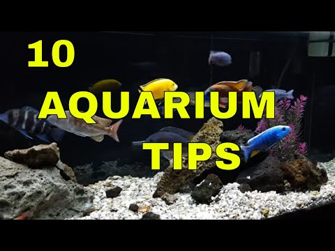 Tropical Fish: 10 Tips