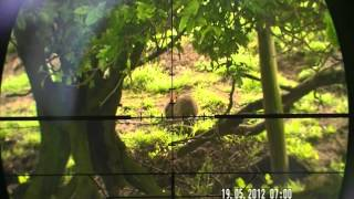 Air rifle hunting Slow motion @25yards GRAFFIC rabbit shot. (red mist slow motion).