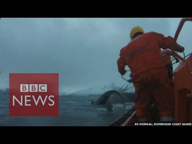 Whale freed from rope off Norway - BBC News