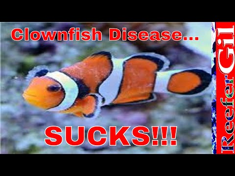 How To Treat Brooklynella- Clownfish Disease