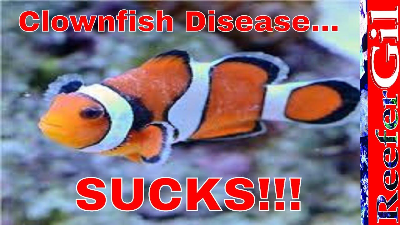 How To Treat Brooklynella- Clownfish Disease - YouTube