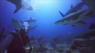 Roatan scuba diving-sharks