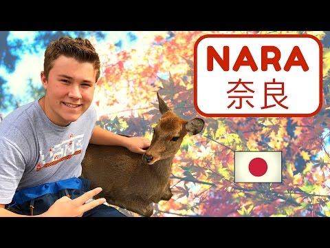 NARA, JAPAN:  Todaiji Temple, Bowing Deer, Green Mochi