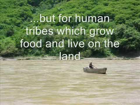 Amazon Rainforest deforestation - YouTube