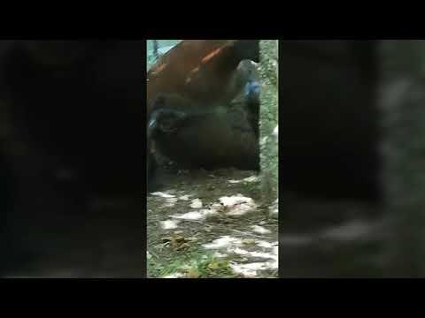 Aparecen abatidos un caballo y una yegua en Barro