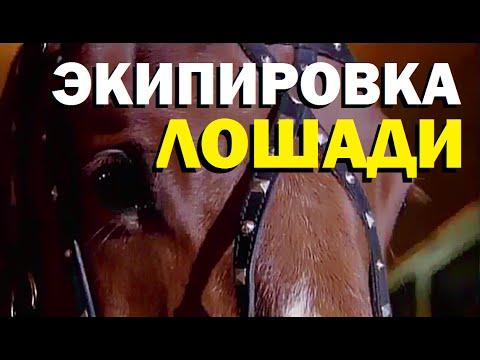 Как называется сбруя для лошади