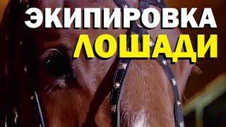 видео Амуниция для лошадей