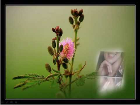 Hoa Trinh Nữ - Tuấn Vũ