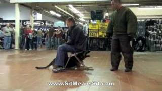 Atlanta Protection Dog Training Demonstration