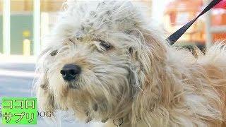 殺処分直前だった1匹の犬を救ったのは、一本のハサミでした…