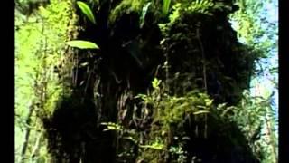Мудрец Йога Васиштха - Обучение Рамы и полное понимание истинного абсолюта. 055