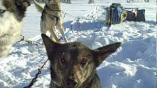 Students Dogsledding And Loving It