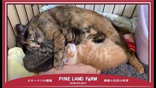 【番外編】子猫が生まれました!!