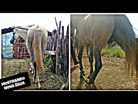 Pegando Cavalo Ferrugem, Mostrando Nova égua {CANAL DO VAQUEIRO }