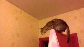 Кошка орет на мотылька