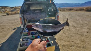 Catch and Cook and Camp Wild Trout Out of my Truck (Freezing Solo Overnight)