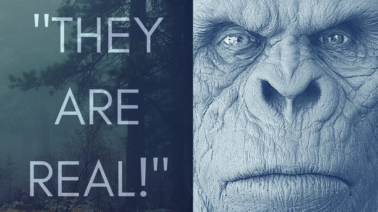 3 True Stories Of Encounters With Sasquatch!  (What are they?!)