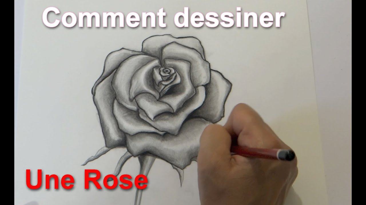 Dessin D Une Rose Drawing A Rose Speed Drawing Youtube