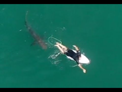 Pro-surfer escapes close encounter with great white shark