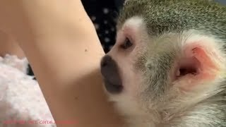 Funny Baby Squirrel Monkeys - Relax moment Playing and do Exercise at home
