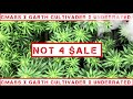 CMASS - Not4Sale (feat. GARTH CULTIVADER & UNDERRATED) [prod. KATO]