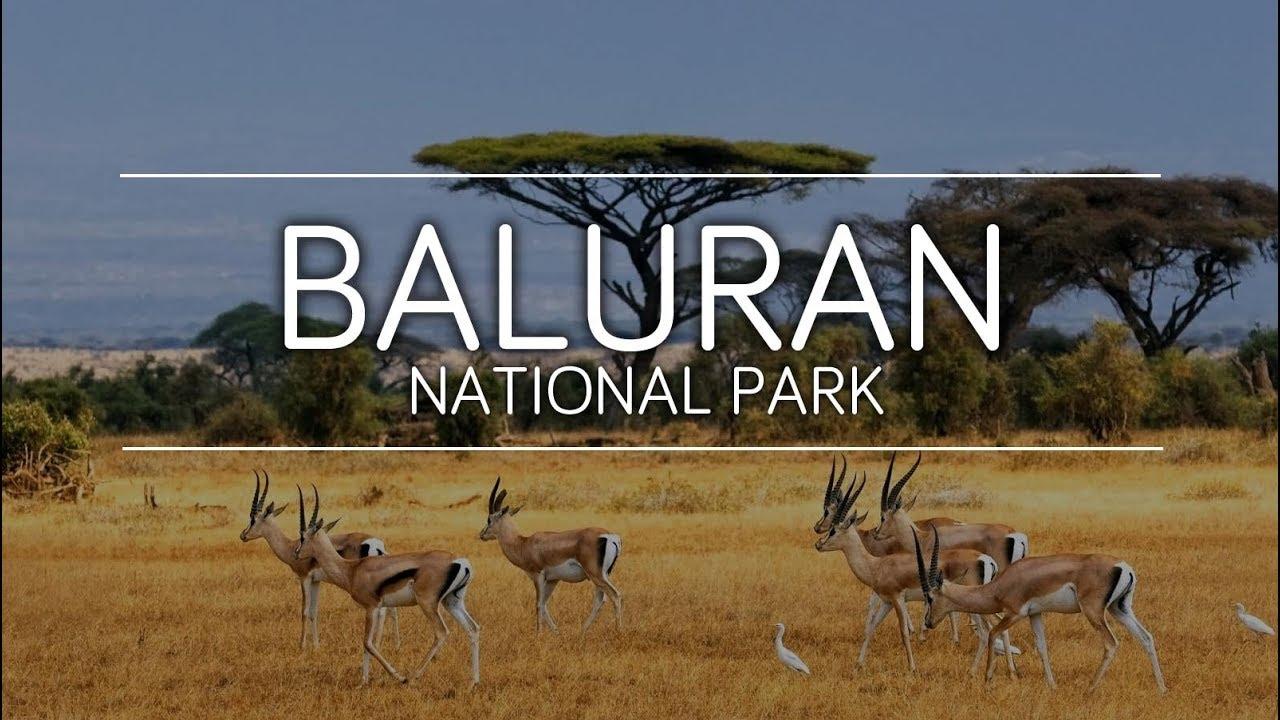 Taman Nasional Baluran, Afrika kecil di Indonesia