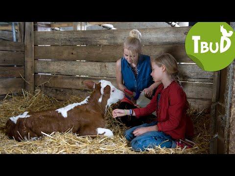Milchmädchenrechnung (Folge 48)   Tiere bis unters Dach   SWR Kindernetz