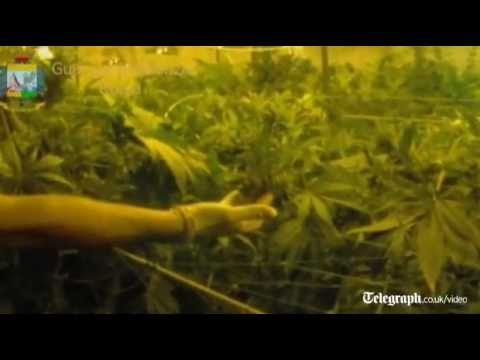 Underground cannabis factory discovered in central Rome