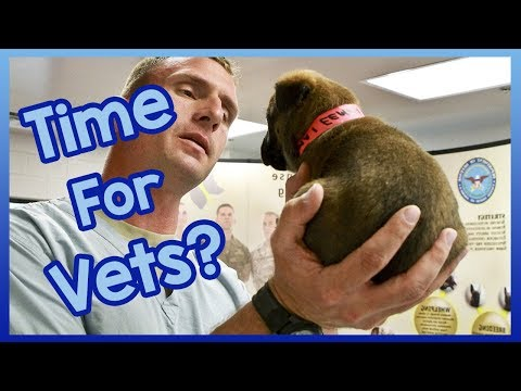When Should You Take Your Dog to the Vets? Is It Time for a Vet Visit?