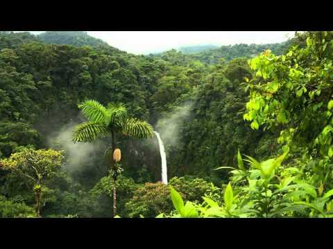 3 horas de som de chuva na Amazônia