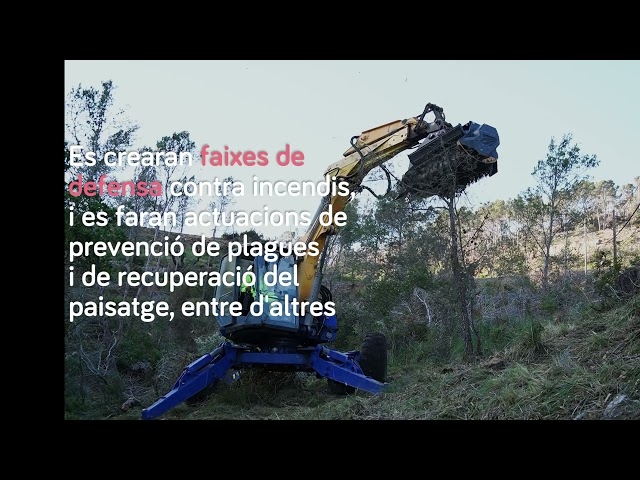 Segona fase de restauració ambiental de la zona afectada pel temporal d'agost de 2020 (Mallorca)