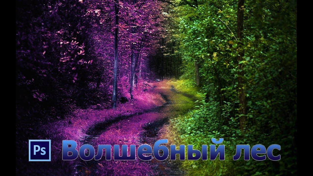 Уроки Фотошоп. Волшебный лес.