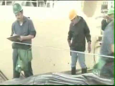Japanese Whalers ask for Australian Assistance