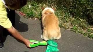 catch-me(キャッチミー:糞取り機)を使用した犬のお散歩事例.