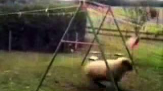Smieszne Filmiki Filmy   Darmowe Gry Online   Fotki  Smieszne Filmiki   Trening