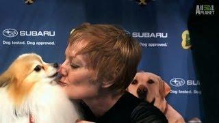 Puppy Bowl Kiss Cam | Puppy Bowl X