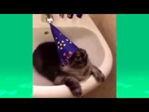 Best of cats and dogs vines PART2