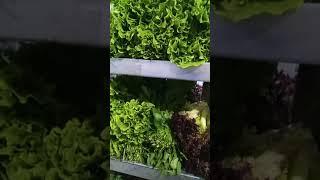 Свежая зелень в ассортименте. Зелень: укроп, петрушка, кинза, салаты, мята и многое другое