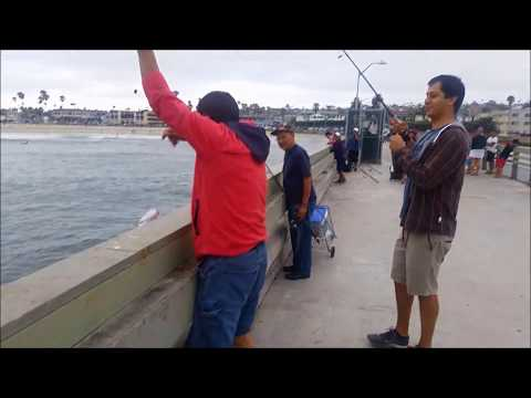 Caught a Corvina - Ocean Beach Pier, San Diego,Ca